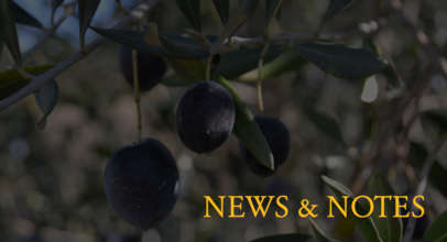 TFO News – Fall 2013